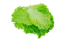 Листья салата на белизне Стоковое Изображение
