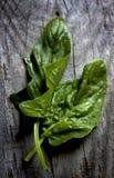 Листья свежего шпината Стоковые Изображения RF