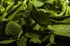 Листья свежей, зеленой и живой мяты стоковые фотографии rf