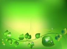 листья сверкная Стоковое Изображение RF