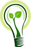 листья светильника Стоковые Фотографии RF