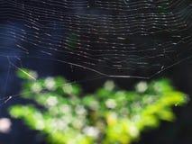 Листья сети и осени паука Стоковое фото RF