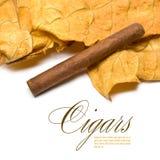 листья сигары Стоковые Изображения RF