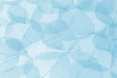 листья сини предпосылки стоковое фото rf