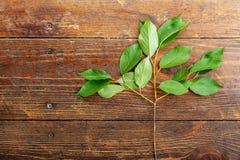 Листья сладостной вишни на деревянной предпосылке Стоковые Изображения RF