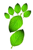 листья следа ноги зеленые Стоковые Изображения RF