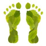 листья следа ноги Стоковые Фотографии RF