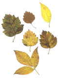 листья смеси осени Стоковое фото RF