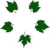 Листья смородины Стоковая Фотография