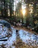 Листья & снег падения Стоковые Изображения RF