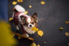 Листья собаки стоковые фотографии rf