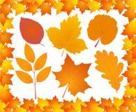 листья собрания осени Стоковые Изображения