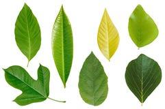 листья собрания Стоковое Фото