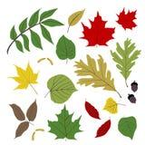 листья собрания бесплатная иллюстрация