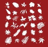 листья собрания стоковое изображение rf