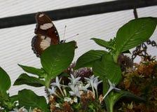 листья спрятанные бабочкой Стоковые Изображения RF