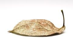листья старые Стоковое Изображение