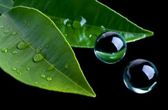 листья стекла шариков стоковые фотографии rf