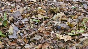 Листья сушат на том основании сток-видео