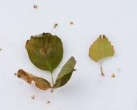Листья сформированные как цветок на выставке Стоковые Фото