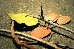 Листья с ветвями Стоковое Изображение