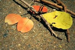 Листья с ветвями Стоковая Фотография