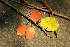 Листья с ветвями Стоковая Фотография RF
