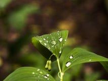 листья с падениями воды на запачканной красочной предпосылке стоковое изображение