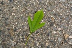 Листья с падениями Стоковое Изображение