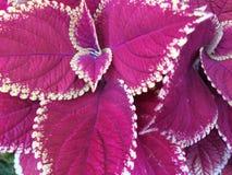Листья с поразительными маркировками Стоковое Изображение RF