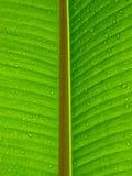 Листья с росой Стоковое Изображение
