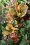 Листья с солнечным светом красивым Стоковые Изображения
