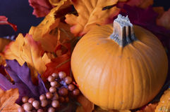 Листья с тыквой Стоковые Изображения