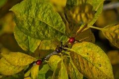 Листья с цветами ПАДЕНИЯ - желтый цвет и плодоовощи Стоковые Фото