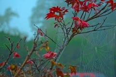 Листья с цветами ПАДЕНИЯ - красно- туман Стоковое Изображение RF