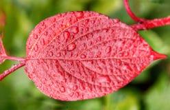Листья с raindrops Стоковое Изображение RF