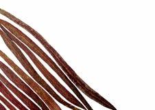Листья текстурируют на белой предпосылке Стоковое Изображение