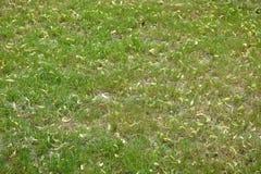 Листья текстуры зеленой травы Стоковые Фото