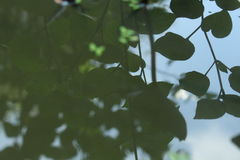 Листья тени в воде Стоковое Изображение RF