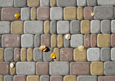 Листья тополя на мостоваой плитки Стоковое Изображение RF