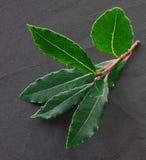 листья травы залива органические Стоковые Фото