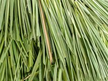 Листья травы лимона Стоковая Фотография