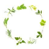листья травы круга Стоковая Фотография