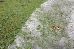 Листья травы на поле цемента Стоковые Фото