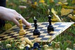 листья травы шахмат Стоковые Фотографии RF