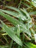 Листья травы Стоковые Изображения
