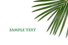 листья тропические Стоковая Фотография
