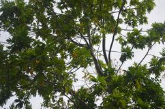 Листья тропического острова стоковое изображение