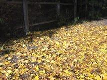 Листья тропы и marple стоковое фото