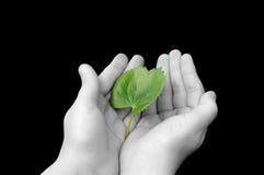 листья удерживания девушки Стоковые Изображения